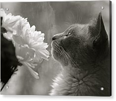 Siamese Cat With Flowers Acrylic Print