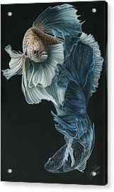 Siamese Fighting Fish Three Acrylic Print by Wayne Pruse
