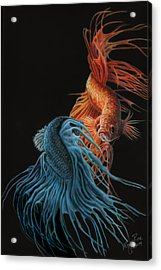 Siamese Fighting Fish Two Acrylic Print