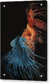 Siamese Fighting Fish Two Acrylic Print by Wayne Pruse