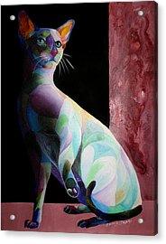 Siamese Shadow Cat 1 Acrylic Print by Sherry Shipley