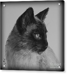 Siamese Silence Acrylic Print