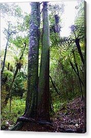 Siamese Twin Trees Acrylic Print