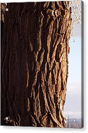 Acrylic Print featuring the photograph Siberian Elm Tree by Deborah Moen