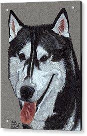 Siberian Husky Vignette Acrylic Print by Anita Putman
