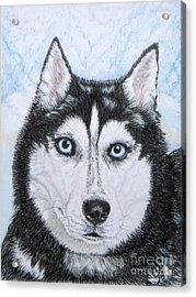 Siberian Husky Acrylic Print by Yvonne Johnstone