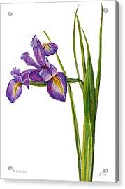 Siberian Iris - Iris Sibirica Acrylic Print
