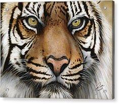 Siberian Tiger Closeup Acrylic Print