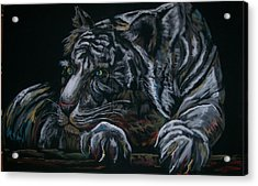 Acrylic Print featuring the pastel Siberian Tiger by Peter Suhocke