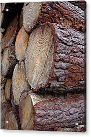 Side Log View Acrylic Print by Michel Mata