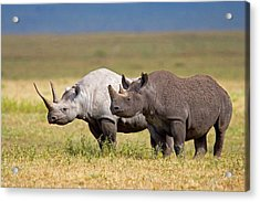Side Profile Of Two Black Rhinoceroses Acrylic Print