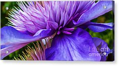 Side View Clematis Acrylic Print