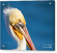 Acrylic Print featuring the photograph Sideview by Dale Nelson
