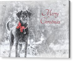 Sienna - Merry Christmas Acrylic Print by Lori Deiter