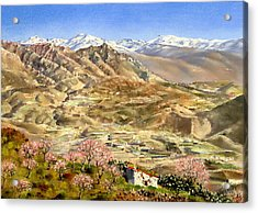 Sierra Nevada With Almond Blossom Acrylic Print by Margaret Merry