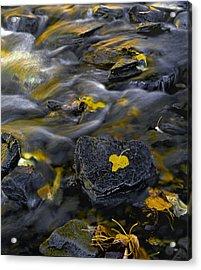 Sierra Stream Acrylic Print