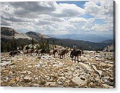 Sierra Trail Acrylic Print