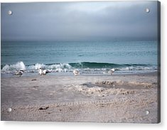 Siesta Key Morning Gulls Acrylic Print