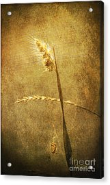 Acrylic Print featuring the photograph Sighing Of Changes by Chris Armytage