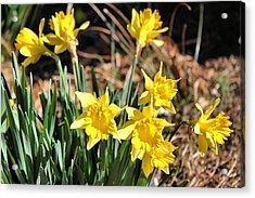 Sign Of Spring Acrylic Print by Carolyn Ricks