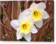 Acrylic Print featuring the photograph Sign Of Spring by Judy Palkimas