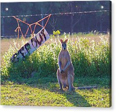 Acrylic Print featuring the photograph Signs  by Debbie Cundy