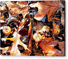 Signs Of Autumn Acrylic Print