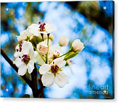 Signs Of Spring Acrylic Print