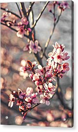 Acrylic Print featuring the photograph Signs Of Spring by Joshua Minso