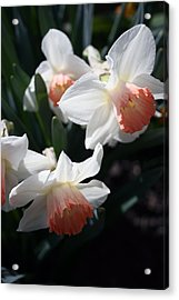 Acrylic Print featuring the photograph Signs Of Spring by Kay Novy
