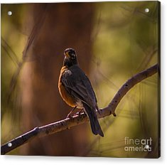 Signs Of Spring Acrylic Print by Mitch Shindelbower