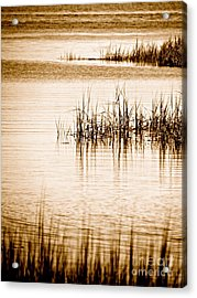 Silence Acrylic Print by Q's House of Art ArtandFinePhotography