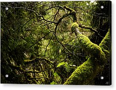 Acrylic Print featuring the photograph Silence In The Green Forest by Lisa Knechtel