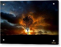 Silence Acrylic Print by Lj Lambert