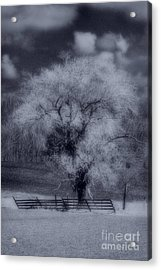 Silence Of Nature Acrylic Print by Cathy  Beharriell