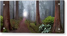 Silence Of The Forest Acrylic Print by David M ( Maclean )