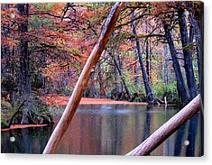 Silent Colors Acrylic Print by David  Norman