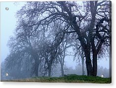 Acrylic Print featuring the photograph Silent Forest by Rima Biswas