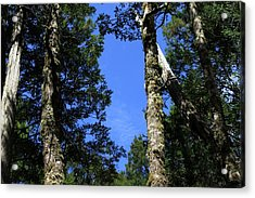 Silent Giants All Profits Go To Hospice Of The Calumet Area Acrylic Print
