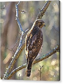 Silent Hunter Acrylic Print by Constantine Gregory
