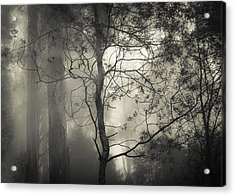 Silent Stirring Acrylic Print by Amy Weiss