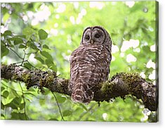 Silent Watcher Of The Woods Acrylic Print