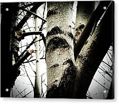 Acrylic Print featuring the photograph Silent Witness by Zinvolle Art