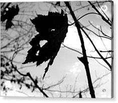 Silhouette Acrylic Print by Allison Tilberg