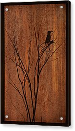 Acrylic Print featuring the photograph Silhouette by Barbara Manis