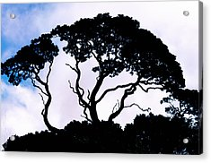 Acrylic Print featuring the photograph Silhouette by Jim Thompson