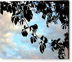 Acrylic Print featuring the photograph Silhouette by Kathy Bassett