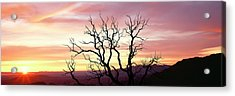 Silhouette Of A Bare Tree At Sunrise Acrylic Print
