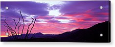 Silhouette Of A Bare Tree At Sunset Acrylic Print by Panoramic Images