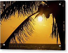 Silhouette Of A Coconut Tree With An Acrylic Print by Michael Interisano